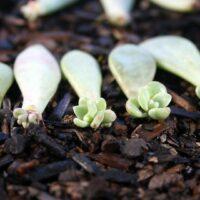propagating_succulents_d2f3a428-fb7d-4e38-88c9-12dd19a28201_960x