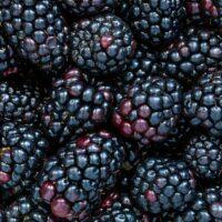 Blackberries-background